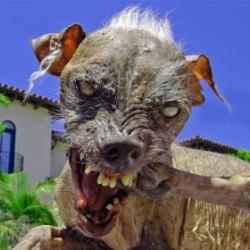 [ugly_dog.jpg]